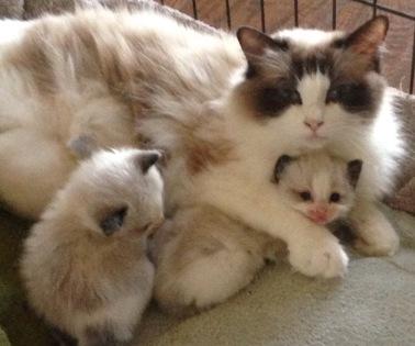 Mom loves her baby kittens