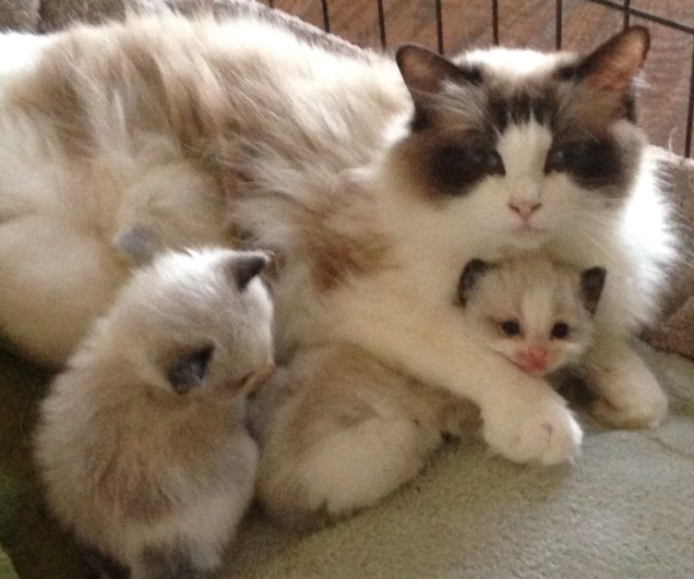 Mom loves her baby kittens